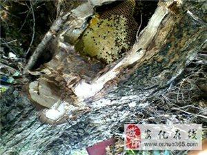 蜂蜜存储温度差别