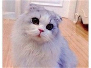 萌萌噠的貓咪