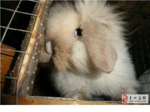 自养宠物兔