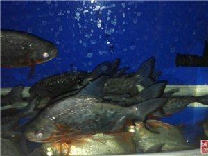 出售自养热带鱼