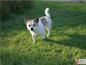 狗狗走失~谁看到我的狗狗请联系我~万分感谢!