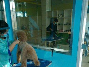 爱宠式宠物生活馆