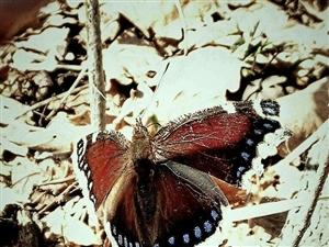 春天到,招蜂引蝶,狂采野花