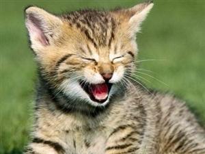 人生嘛,就是笑笑�e人,�便再��e人笑笑。