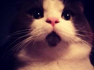 �@只小�名叫斑��,由于嘴巴附近的胎�,看上去永�h是一幅吃�@的表情,萌爆了。