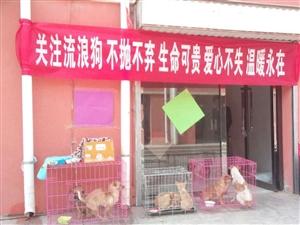 阿拉善同城流浪狗�J�B�I�B活�娱_始了。