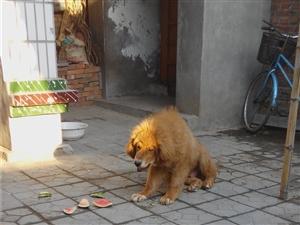 欣赏小动物