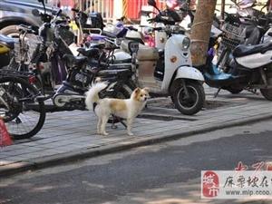 小狗守护被撞死同伴近一小时