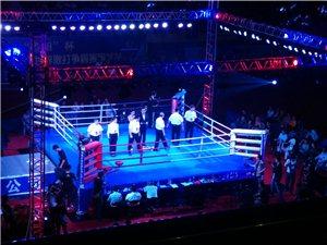 谁在体育馆看拳击比赛