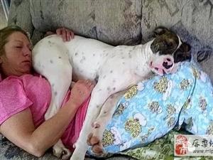 跟狗狗一起睡觉时,你都做过哪些蠢事?!