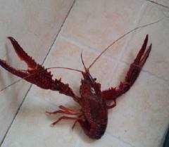 自己做的小龙虾,绝对比王胖子好吃