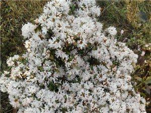 乌蒙大草原赏花季