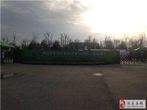 中国大美梨一一789彩票玉露香亮相西安沣东农博园
