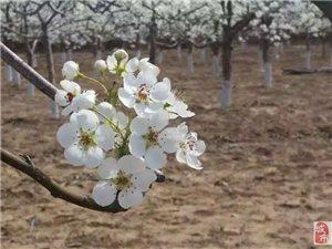 梨�l春�