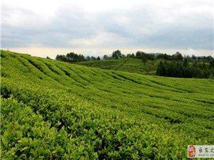 春茶正好,我在增田茶�@等你�怼�…