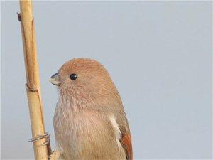 请问这叫什么鸟