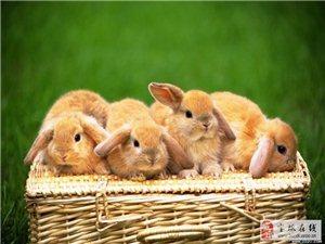 可愛的兔寶寶