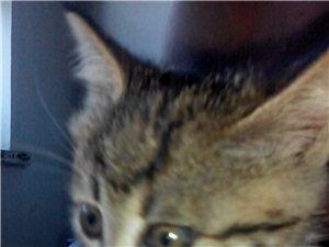 自家小猫出售