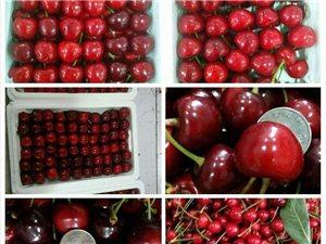 新鮮大櫻桃特賣