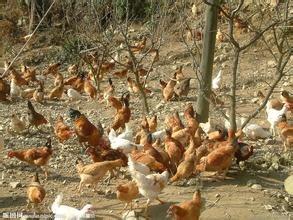 生态养殖,绿色环保,营养丰富,馈赠佳品。