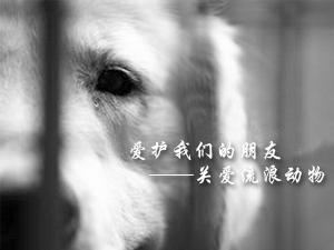 为流浪动物代言  流浪动物摄影征集