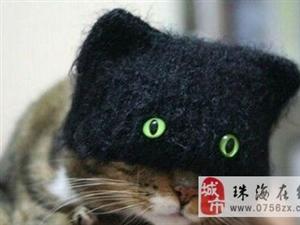 主人个二货,这帽子戴出去得有多吓人啊!