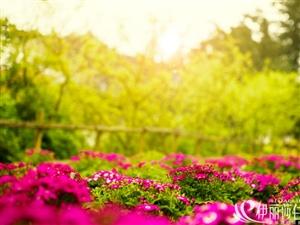 【伊丽莎白●爱琴岛】春暖花开