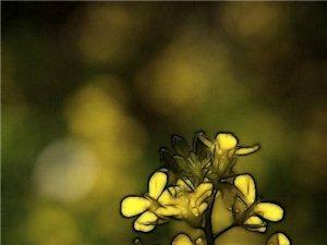 花卉�c�L花