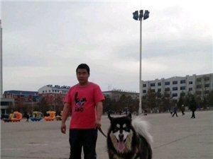 看看的召唤兽!座天狼!~