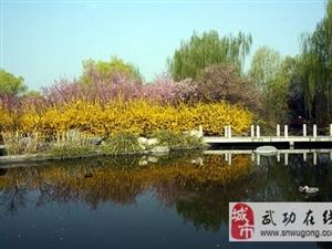 �盍枋�觅p花暨�鸦ü�4月5日�_幕
