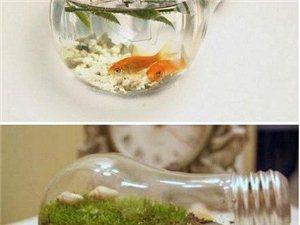 坏的灯泡~各种创意养鱼种花