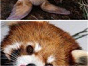 好萌的动物,看看他们的眼神,有被电倒吗?