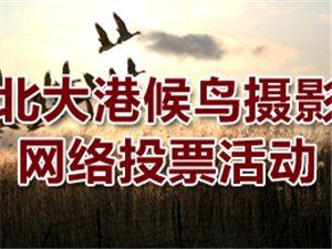 北大港候鸟摄影网络评选活动开始了