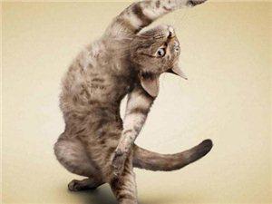 动物瑜伽太搞笑了(超萌哦)