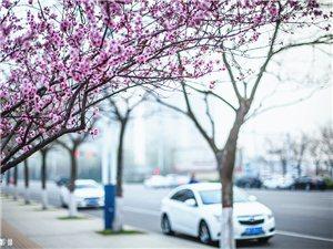 三月末的滨州之行随拍
