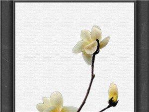 一�MPS的花卉