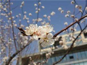 春天的�_步吧!!!