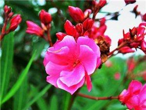 贵州花多请转告朋友,外出郊游千万别碰8种花草!