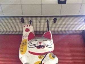 实拍日本街头:萌猫 当道