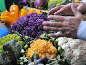以色列专家考察宾阳农业