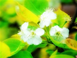 春,花,色