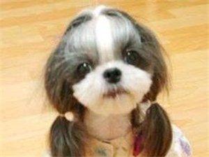 常见犬的品种介绍
