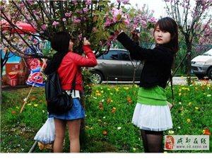 """贴吧分享:青白江区""""城厢镇""""的历史文化资源考察"""