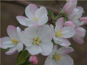 府谷的春季①
