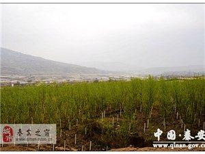 甘肃省林业厅段昌盛一行深入秦安县调研林业工作