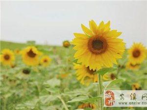心若计较,处处都是怨言;心若放宽,时时都是春天