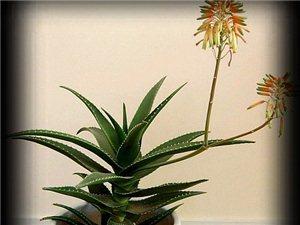 植物净化室内环境污染时要注意四条原则