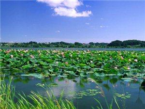 衡水旅游推荐地之美丽的衡水湖