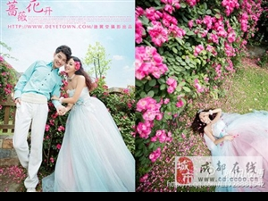 粉蔷薇:爱的誓言,执子之手,与子偕老,白蔷薇:纯洁的爱情