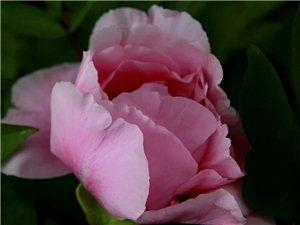 美丽的花儿